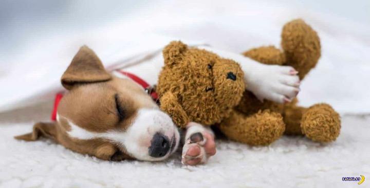 Ученые выяснили, что собакам снятся хозяева!