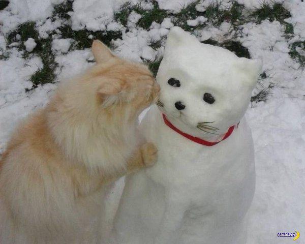 Невероятные коты!