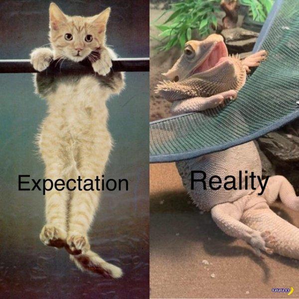 Ожидание против реальности