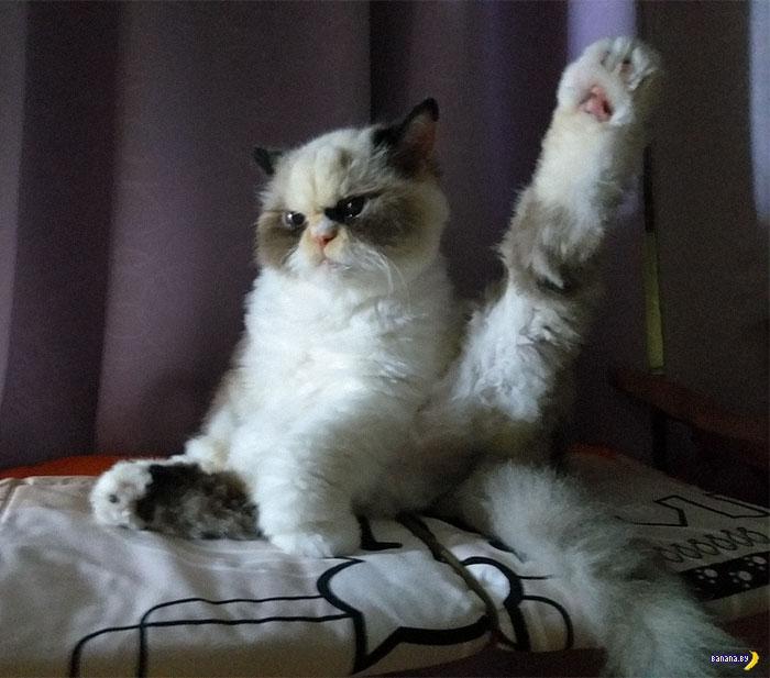Объявлен новый Grumpy Cat
