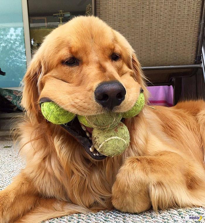 Пёс Финли и его мировой рекорд