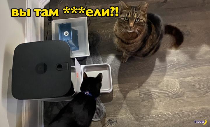 Сбой системы SmartFeeder оставил котиков голодными