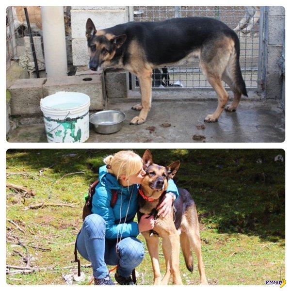 Пёсели до и после Adoption