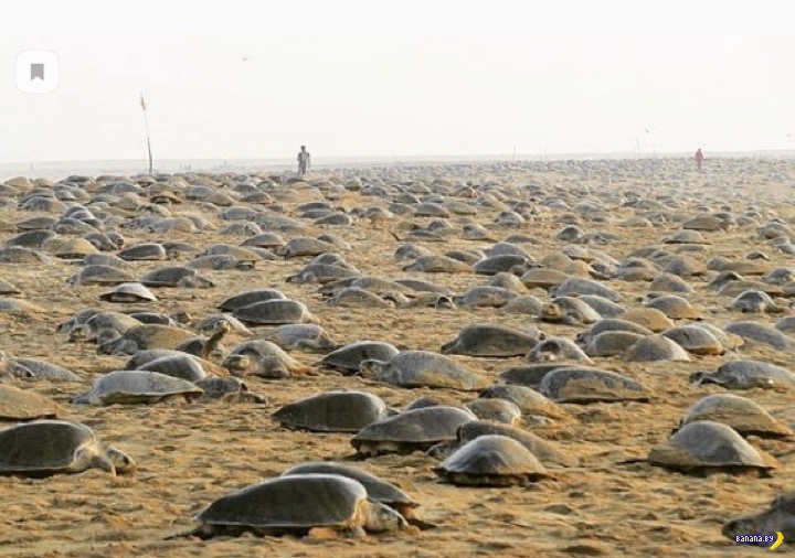 Ушли люди, пришли черепахи