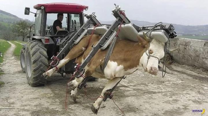 Машина для переворачивания коров