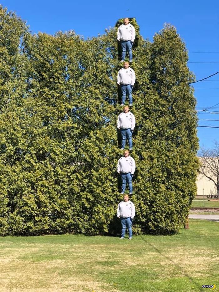 Как измерять высоту дерева во дворе?