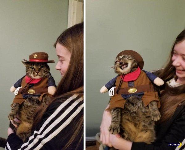 Коты, коты, котейки