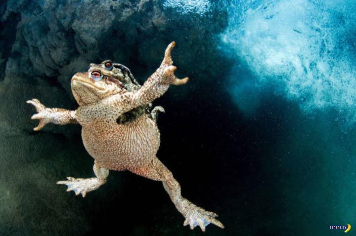 Лучшие фото с конкурса BigPicture Natural World Photography 2020