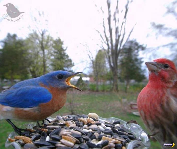 Фотоателье для птиц