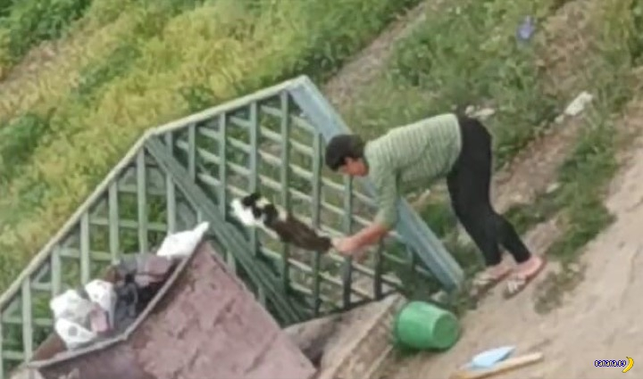 Жестокое убийство кошки стоит в Беларуси $279