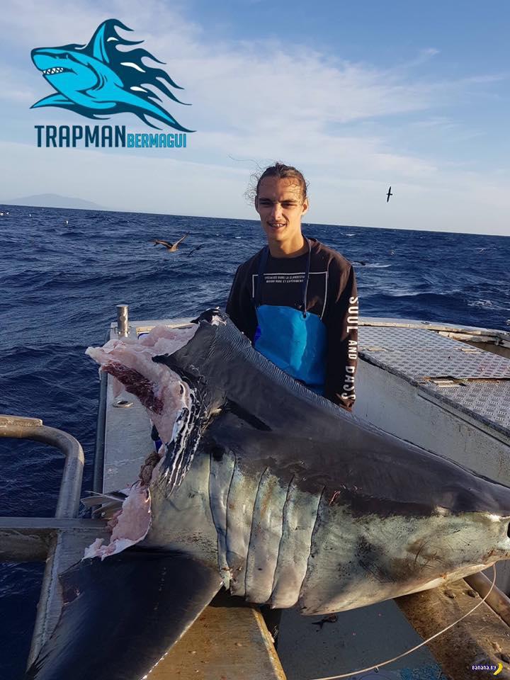 Есть вопросы к фото с головой акулы