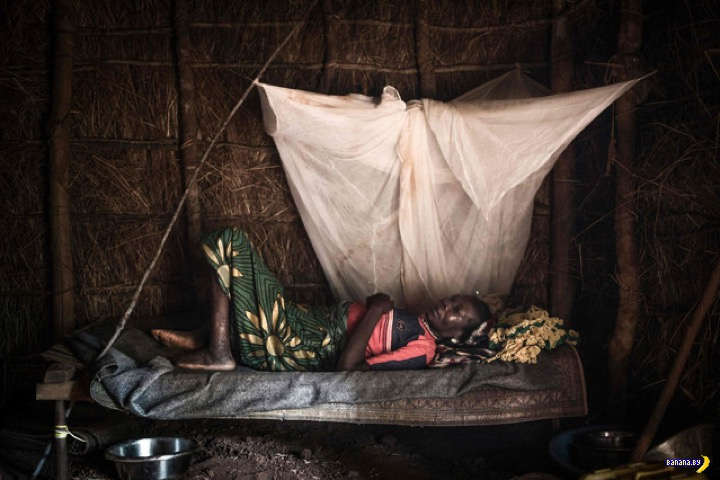 В объективе Конго - сентябрь 2020