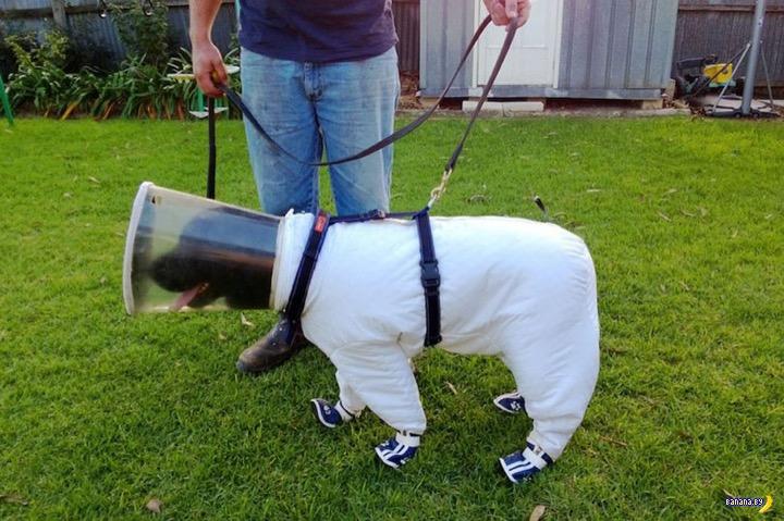 Почему собака в скафандре?