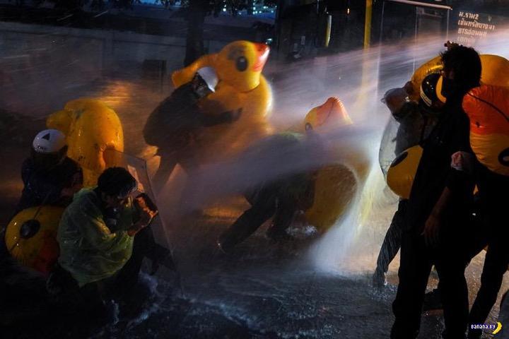 Надувные уточки и массовые беспорядки