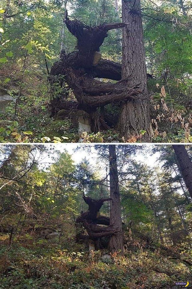 Украинский Грут перепугал грибников