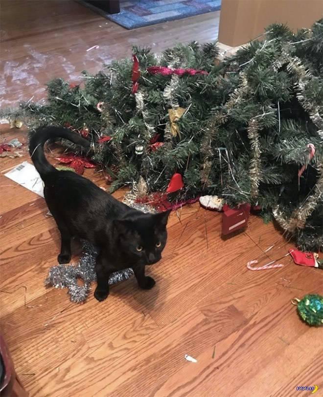Коты против ёлок