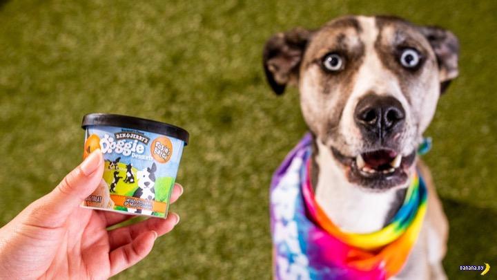 Мороженое для собак