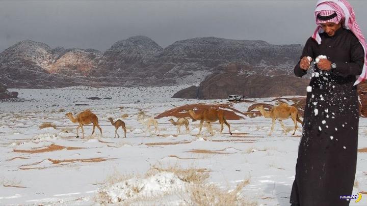 Снег в пустыне Сахара видели?