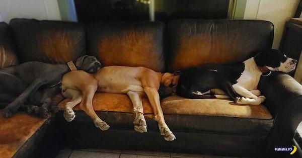 Собака хочет спать –собака будет спать!