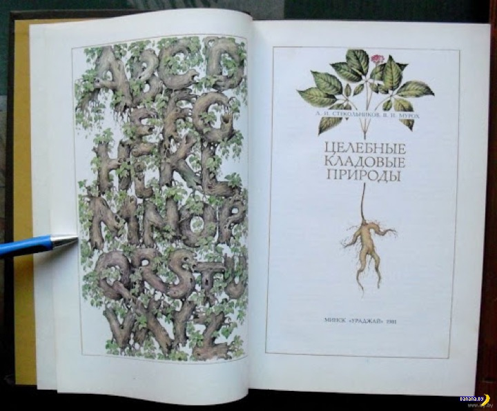 Житейские истории: целебные травы