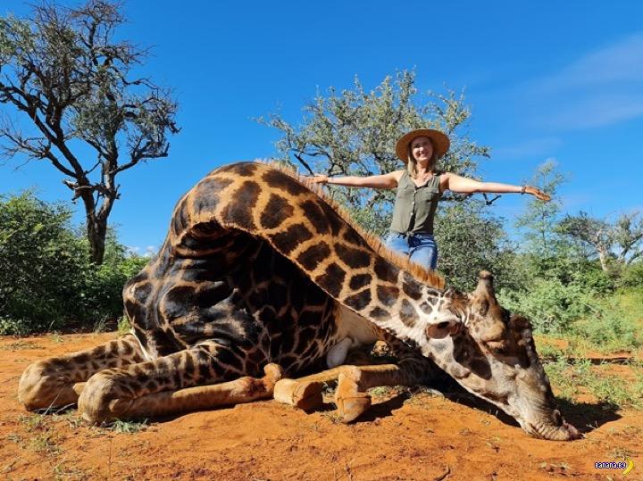 Фото с сердцем жирафа и скандал в Сети