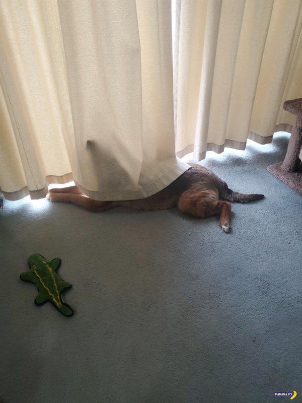 Ой, а у вас собака сломалась!