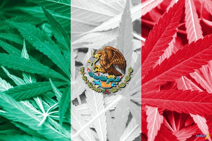 В Мексике легализовали марихуану