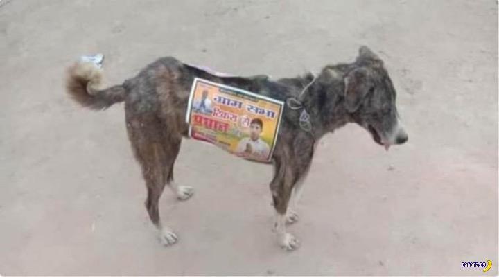 Рекламные собаки в Индии