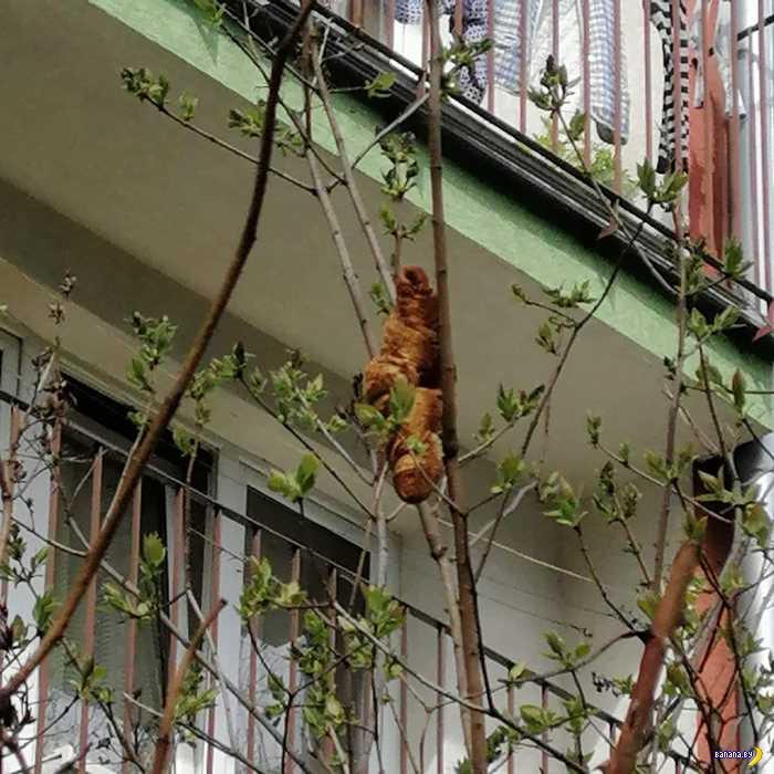 Неведомая тварь на дереве в Кракове