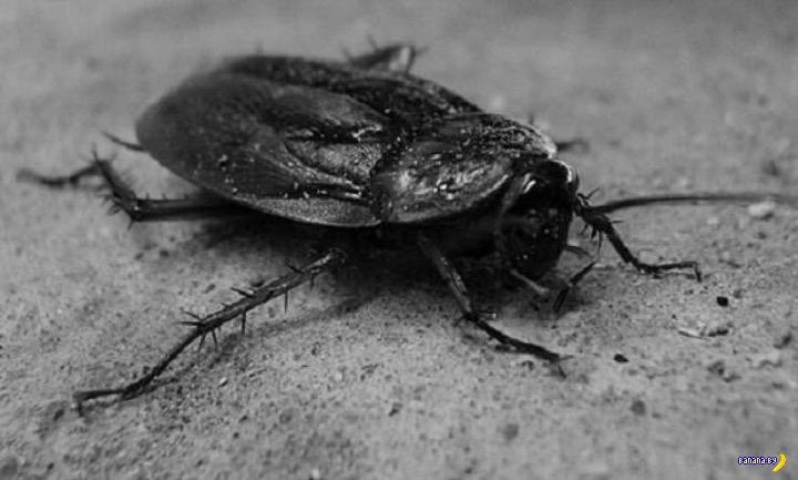 Факты про тараканов
