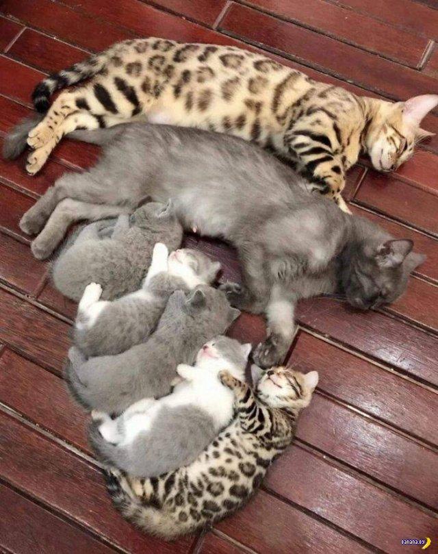 Бесконечно милые животные