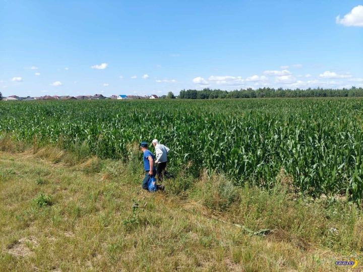 Деды кукурузы