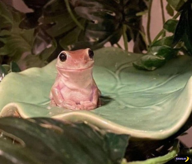 Великолепие лягушек