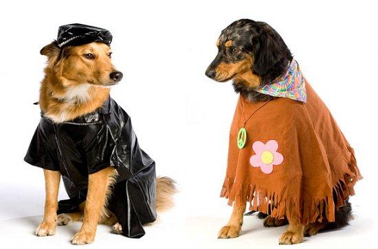 Животные тоже празднуют Halloween