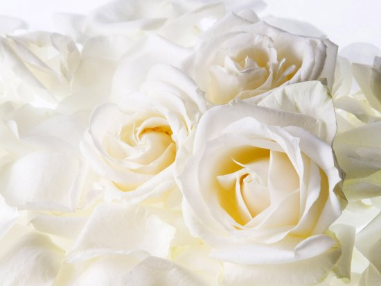 Цветы для рабочего стола