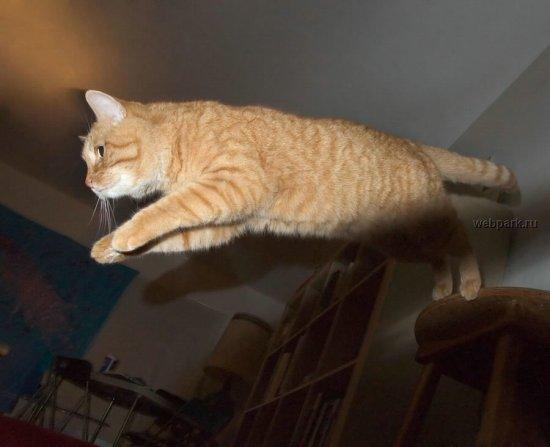 Летающие коты!