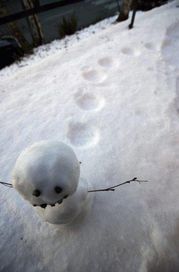 Лучшие снеговоки