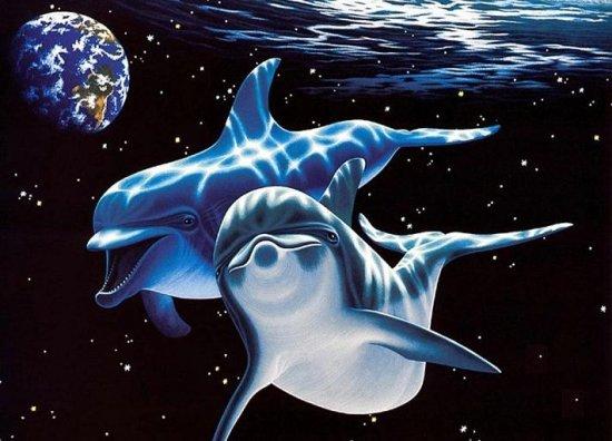 Соседи по разуму.Самцы дельфинов дарят своим подругам букеты из водорослей.