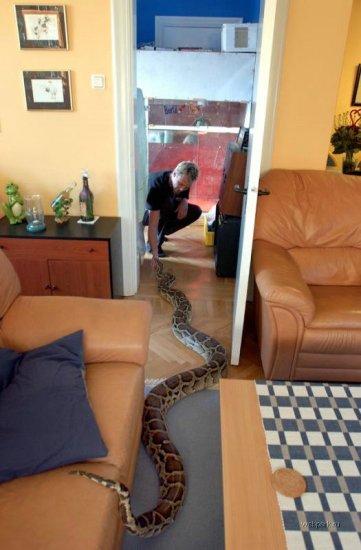 Вырастет из змейки - змей