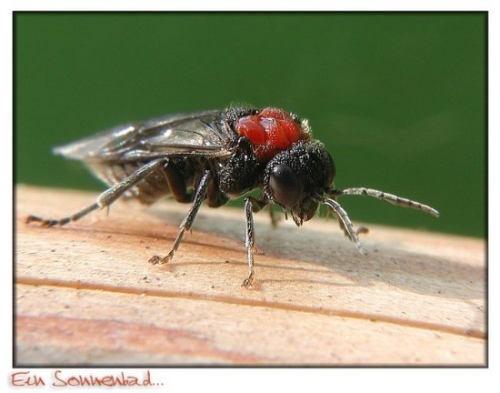 Макрофотографии насекомых (фотограф Olaf Wolfram)