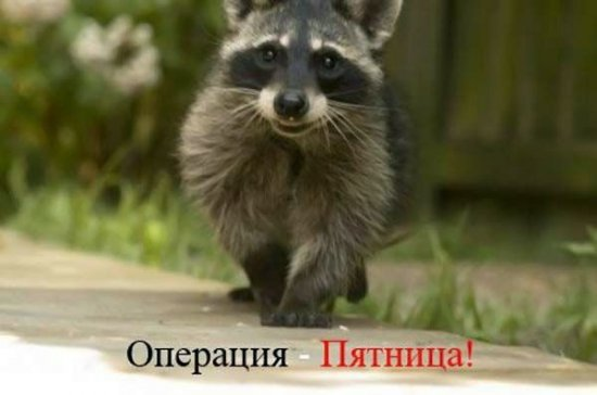 "Операция ""Тяпница"" (20 фото)"