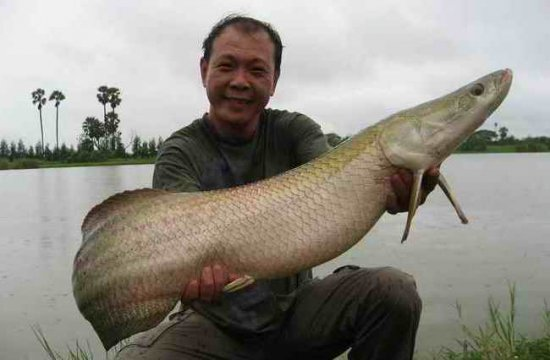 Рыбалка в Таиланде ( фото)