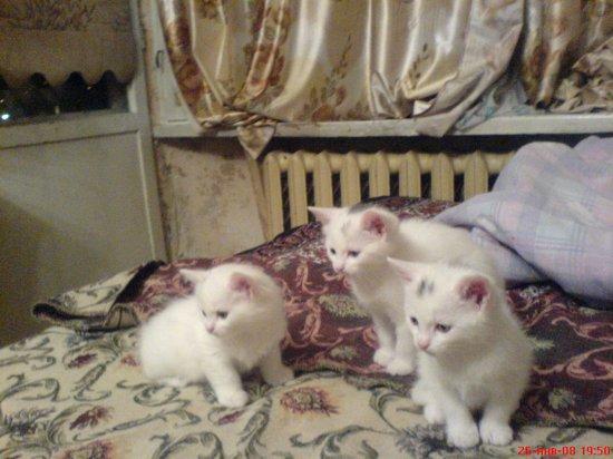Котята в хорошие руки!