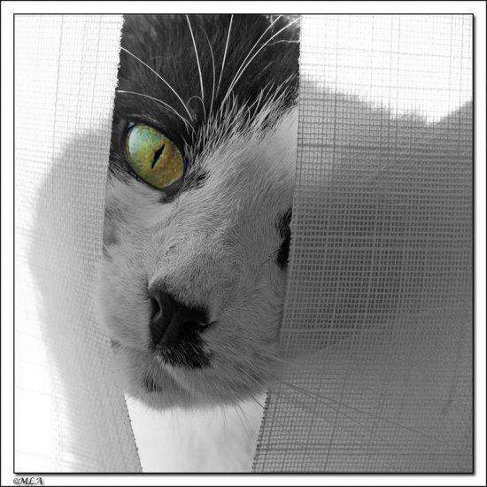 Для любителей кошек, добро пожаловать!:)