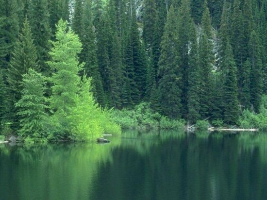 природа часть 2