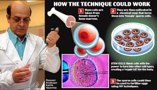 Сперма из костного мозга: мужчины больше не нужны