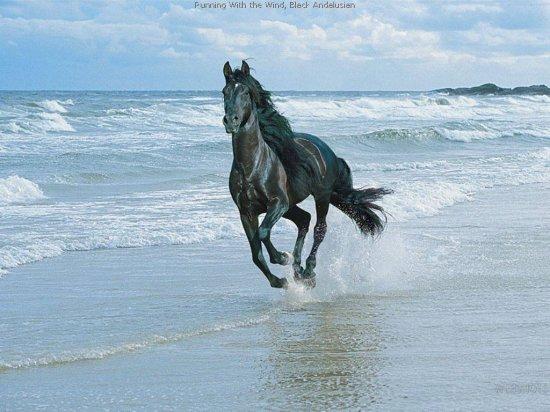 Удивительный мир живой природы
