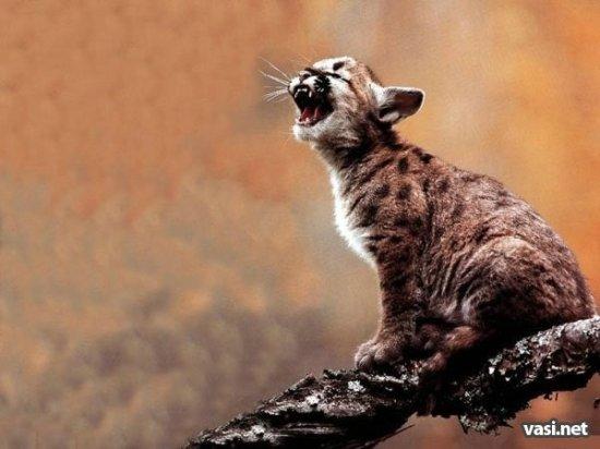 Позитив: Зевающие животные