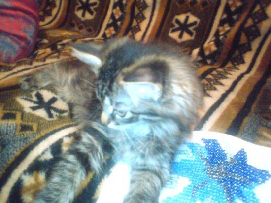 4 милых котенка ищут новую семью