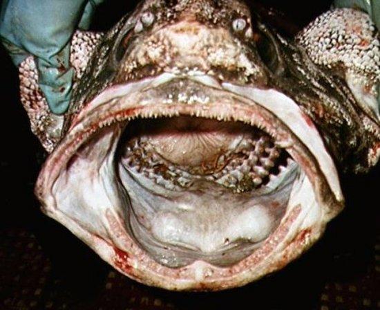 Топ 10 самых отвратительных рыб